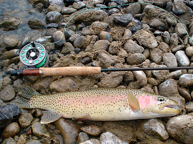 Fly fishing trips in Montana