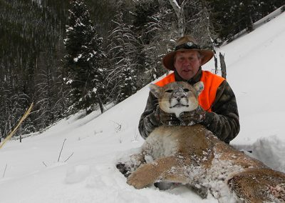 montana_mountain_lion