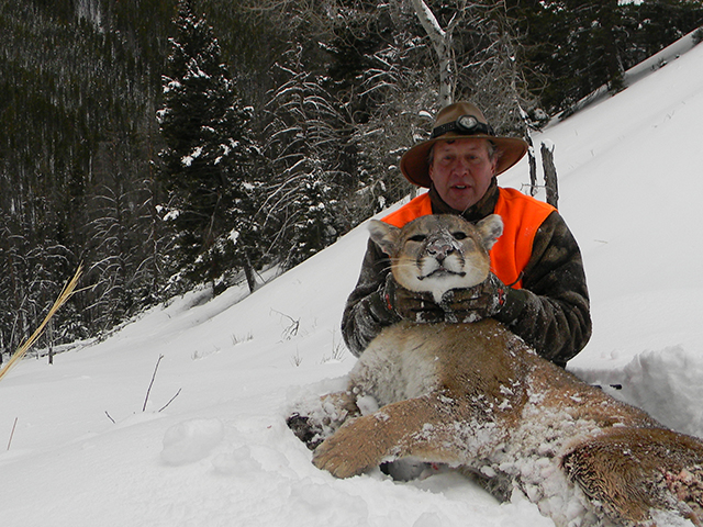 Montana elk outfitter and guide