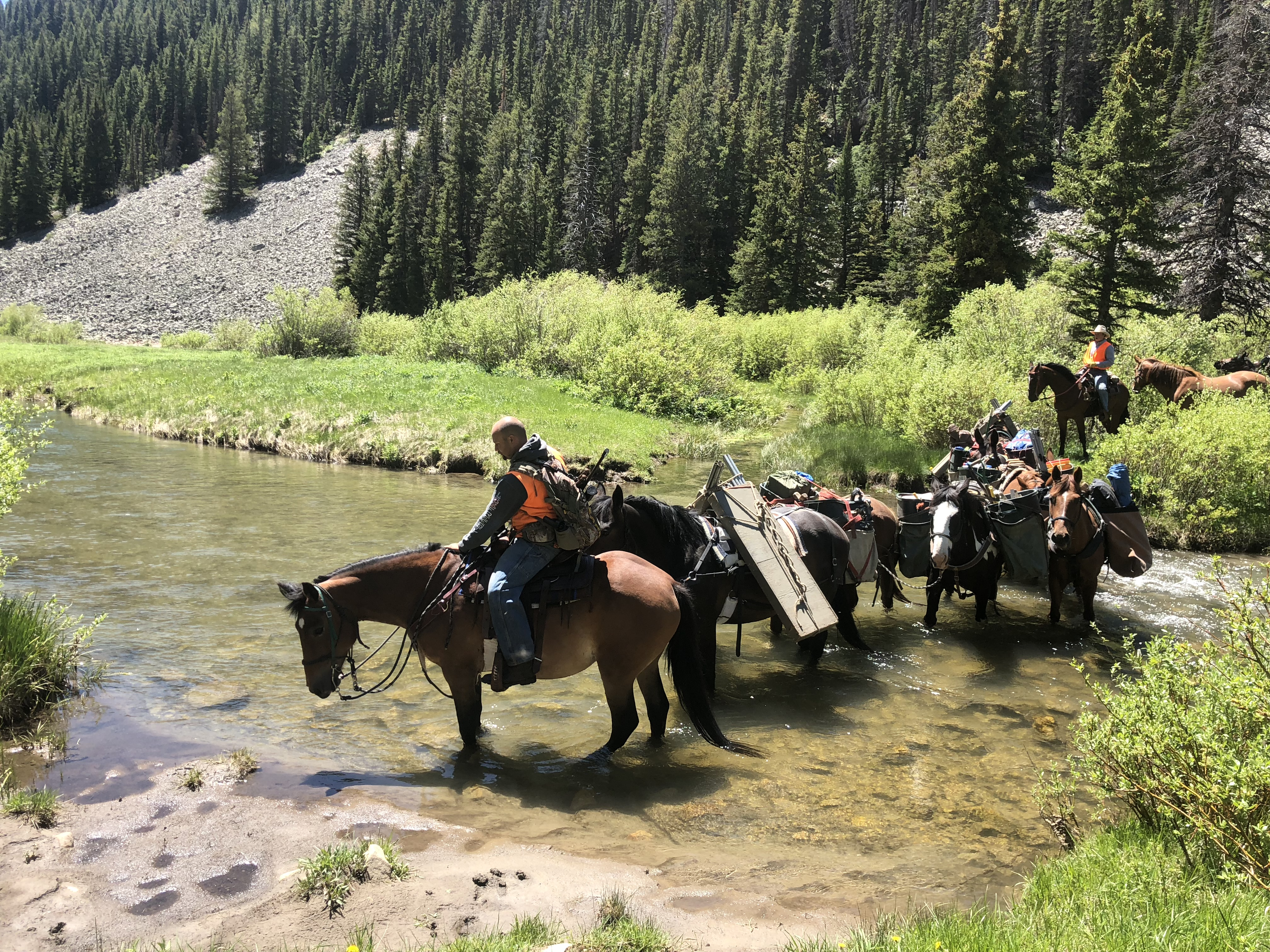 Backcountry horseback pack trips